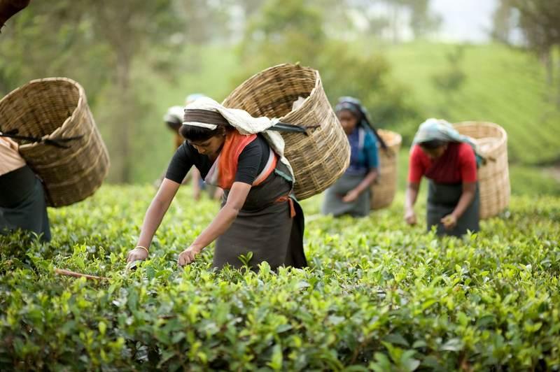 Индия чайные традиции