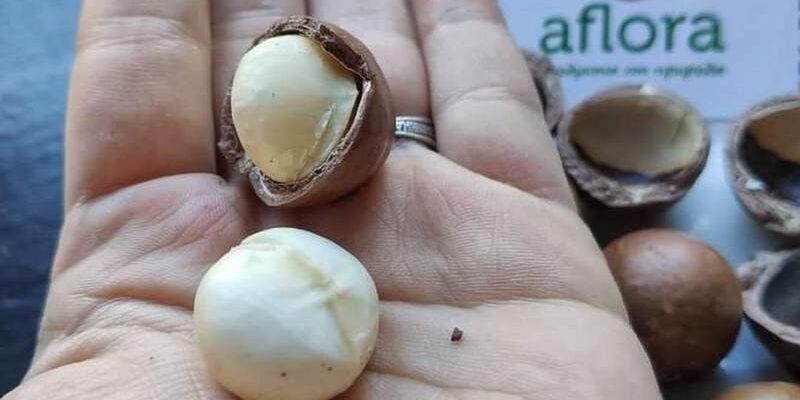 Орехи макадамия в россии где купить